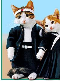 猫が飼い主を舐めてくる理由とその時の気持ち
